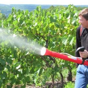 Внекорневая подкормка винограда