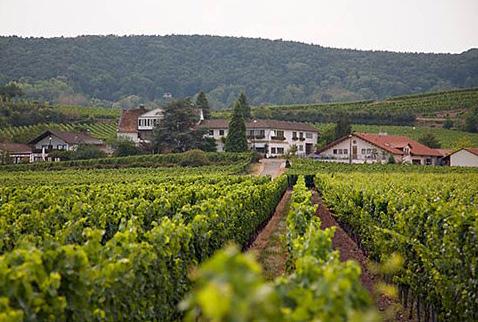 плантации винограда в германии