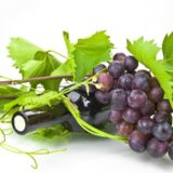 технические сорта винограда мини
