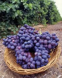 грозди винограда гриф
