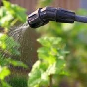 обработка винограда кубань