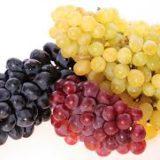 какие сорта винограда распространены в Украине