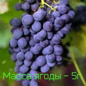 устойчивость к болезням Виноград Муромец