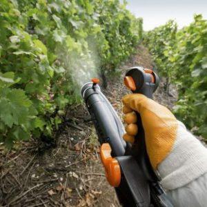 оприскивание винограда