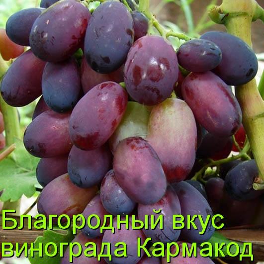 Благородный вкус винограда Кармакод