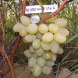 ягоды винограда княгиня ольга