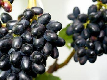 плоды винограда Чарли