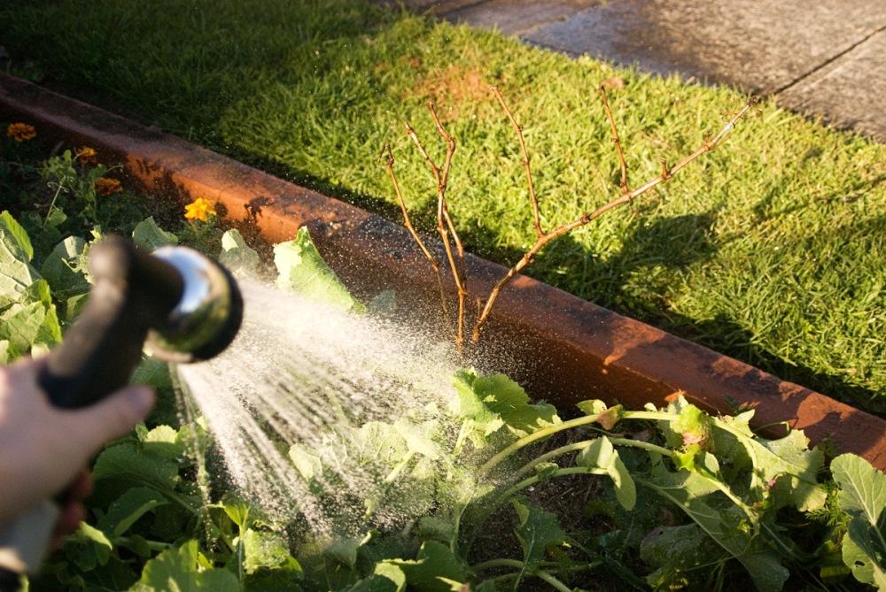 время весеннего полива винограда