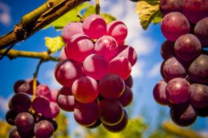 гроздь гранатового