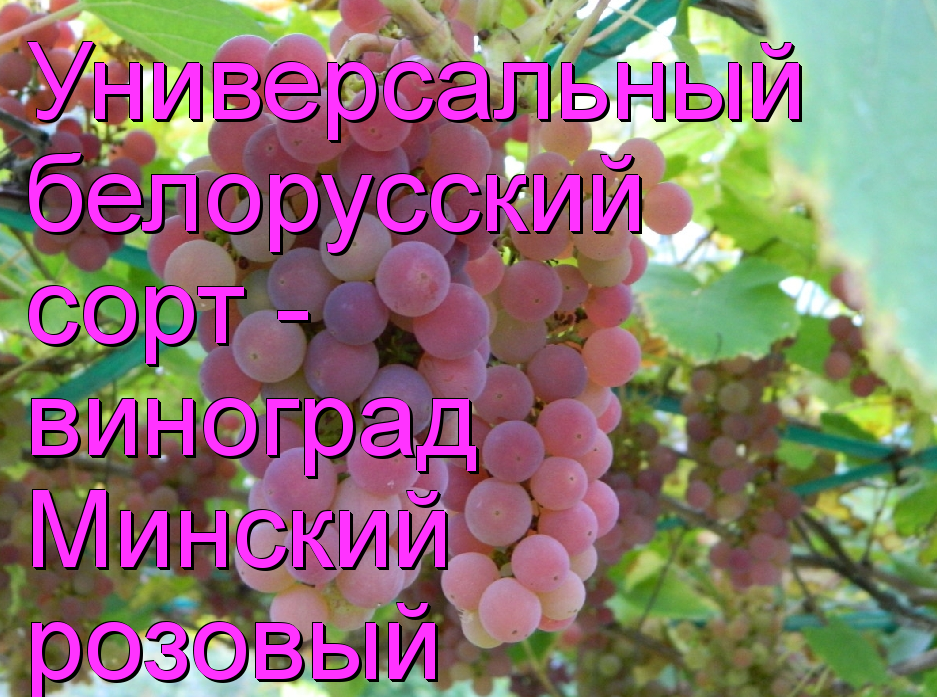Снимок экрана 2016-05-24 в 18.01.51