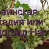 Аркадия или виноград Настя