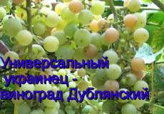 виноград Дублянский