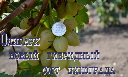 виноград олигарх