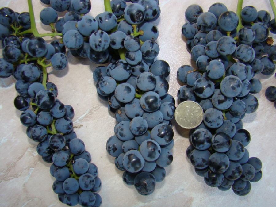 грозди аметистового