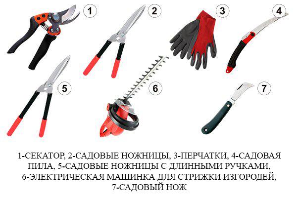 инструменты для обрезки виноградного куста