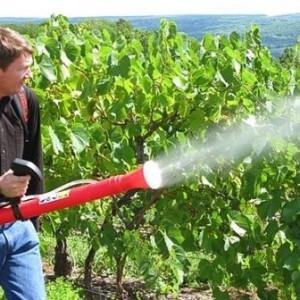 Мочевина для винограда помогает от вредителей