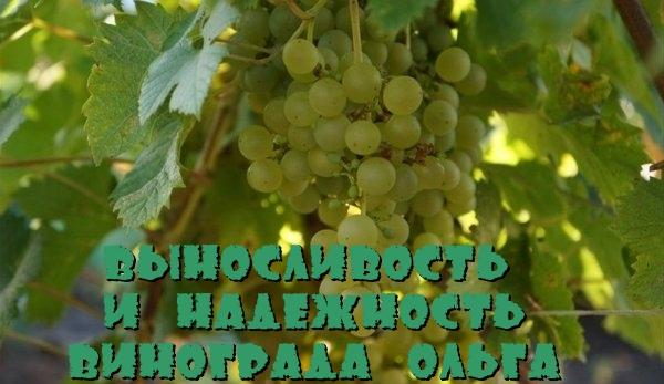 Виноград Ольга
