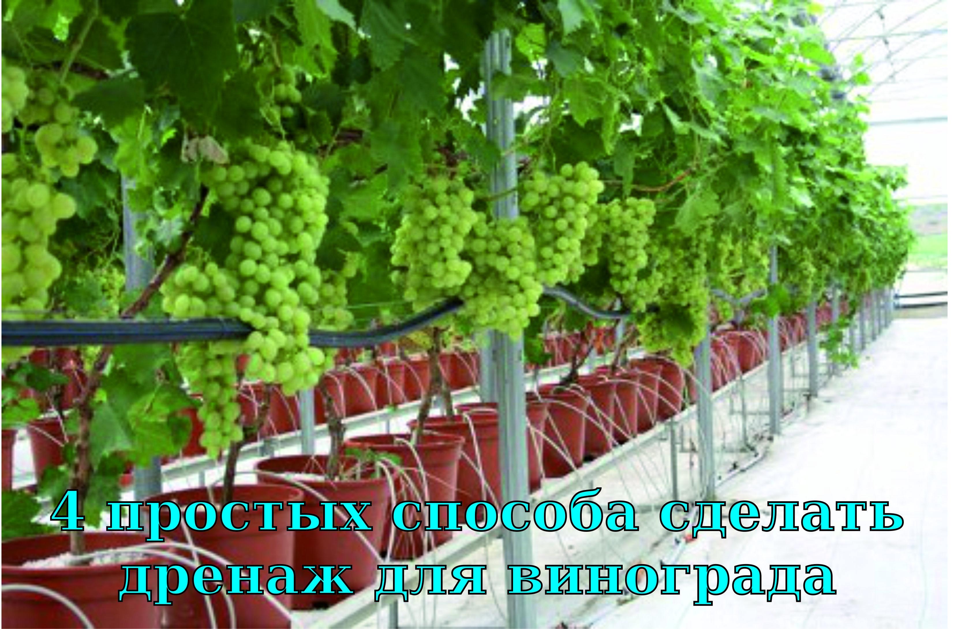 Система полива для винограда