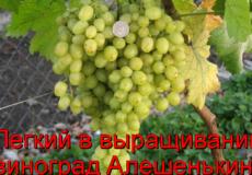 виноград Алешенькин