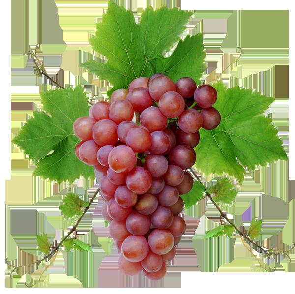 гроздь Роселла