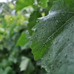 Обработка после дождя