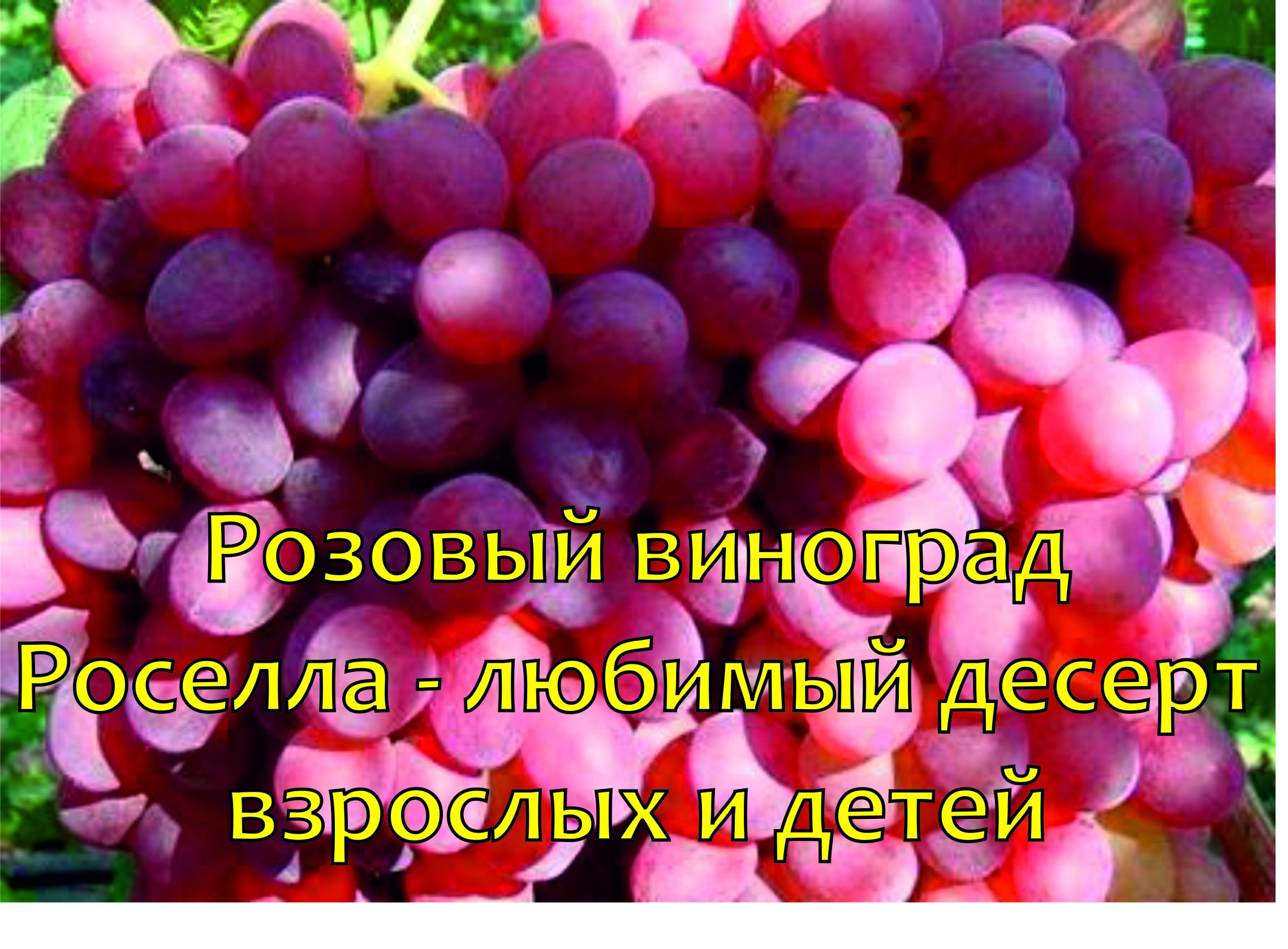 плоды винограда Роселла