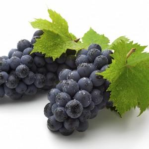 Сезонная обработка винограда