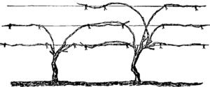 формировка штамбовая многорукавная