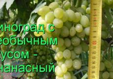 виноград ананасный