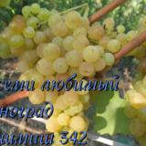 кишмиш 342