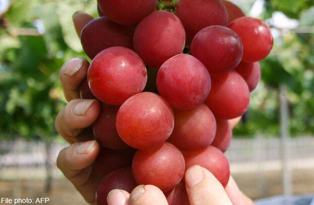 сорт винограда Ruby Roman