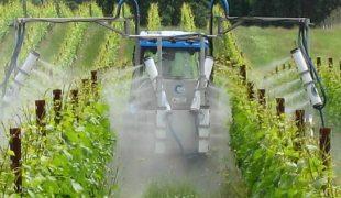 правильный полив винограда