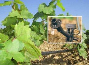 советы виноградарям