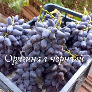 грозди винограда оригинал черный