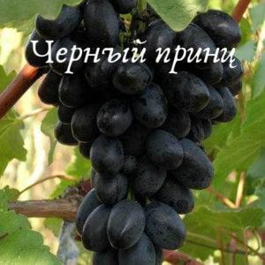ягоды сорт черный принц